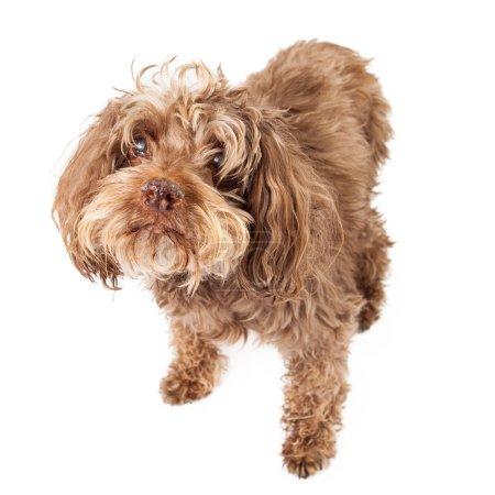 Elderly Blind Rescue Dog