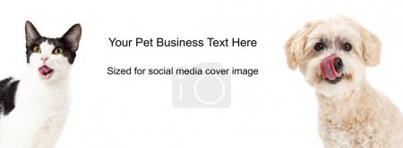 Photo for Black and white cat and white Poodle dog licking lips. Image cropped to the size of a social media timeline cover placeholder - Royalty Free Image
