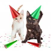 Two Cute Kittens in Party Hats