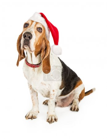 Basset Hound Dog Santa Claus