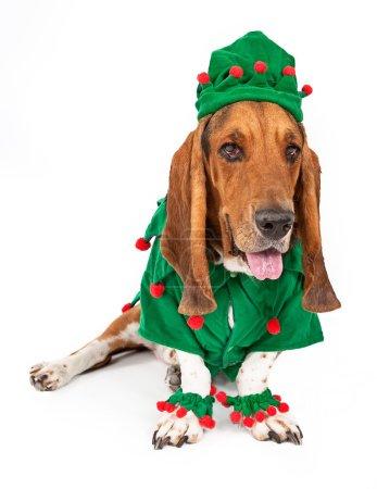 Basset Hound Elf Dog