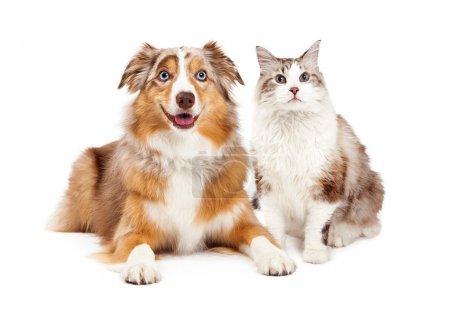 Cat and Happy Dog