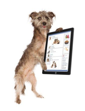 Photo pour Chien mignon tenant une tablette faisant défiler un site de médias sociaux - image libre de droit