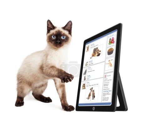 Photo pour Chaton mignon défilant à travers un site de médias sociaux sur un appareil tablette - image libre de droit