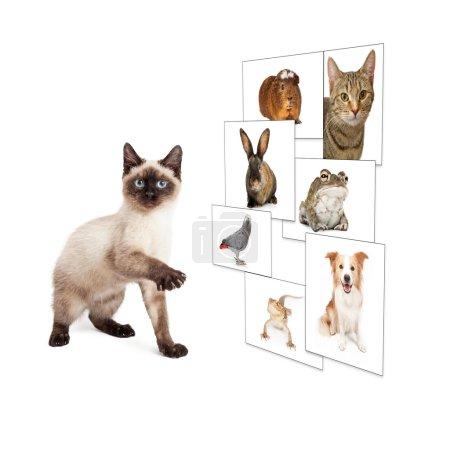 Photo pour Mignon chaton levant patte pour faire défiler à travers le mur photo virtuel - image libre de droit