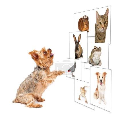 Photo pour Image drôle d'un petit chien défilant à travers un mur photo numérique - image libre de droit