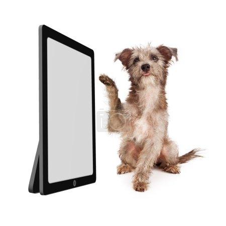 Photo pour Un petit chien chiot de race mixte terrier levant une patte pour toucher un grand appareil informatique avec un écran vide - image libre de droit