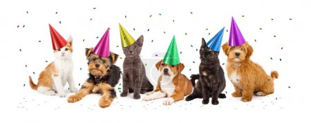 A large group of young kittens and puppies togethe...