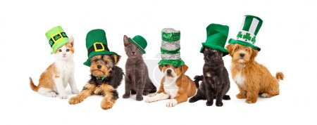Les chatons et chiots St Patricks Day