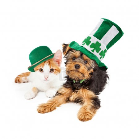St Patricks Day Puppy and Kitten