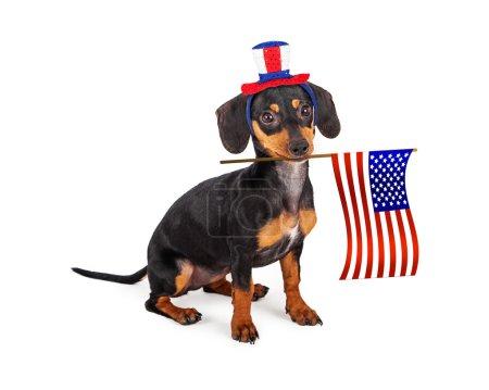 Independence Day Dachshund Dog
