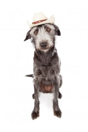 Terrier Dog Wearing Cowboy Hat