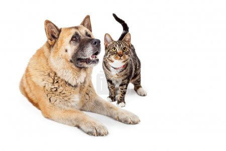 Large Dog and Cat Looking Up