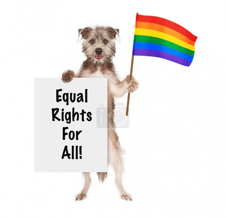 Dog Supporting Gay Rights