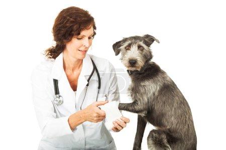 Veterinarian and injured dog