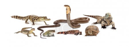 Group of various reptiles