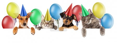 Photo pour Birthday themed composite of group of cats and dogs isolated on white background - image libre de droit