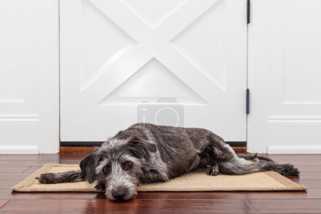 dog laying in front of front door