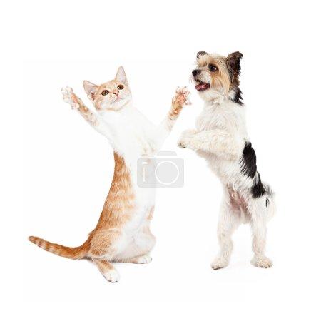 Cute tabby kitten and little dog