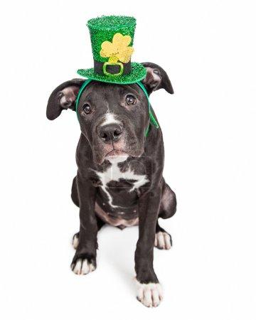 Puppy dog wearing Irish hat
