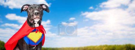 Foto de Perro lindo mestizaje ataviado con traje de super héroe en campo con el azul del cielo y los árboles en el fondo - Imagen libre de derechos