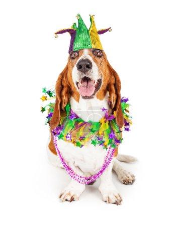 Basset Hound dog wearing a jester hat