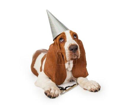 festive Basset Hound puppy