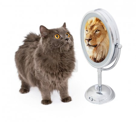 Cat looking into mirror and seeing lion
