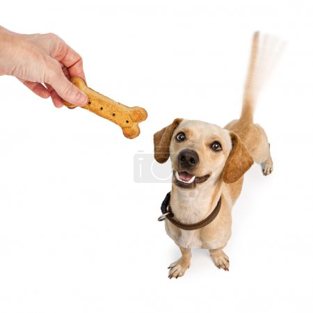 dog looking up at hand with treat