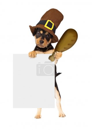 Dog wearing Thanksgiving pilgrim hat