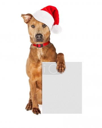 Photo for Cute crossbreed dog wearing a Christmas Santa Claus hat and red collar holding a blank sign isolated on white background - Royalty Free Image