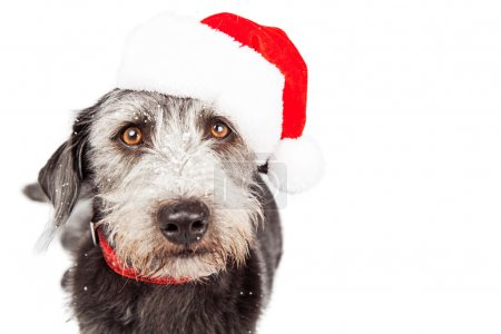dog wearing Santa Claus hat