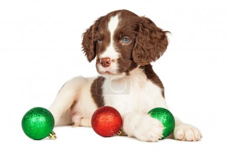 puppy with Christmas ornaments