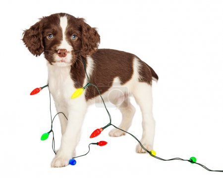 puppy with Christmas lights