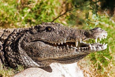 dangerous crocodile outdoors