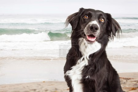 Happy Dog at Beach