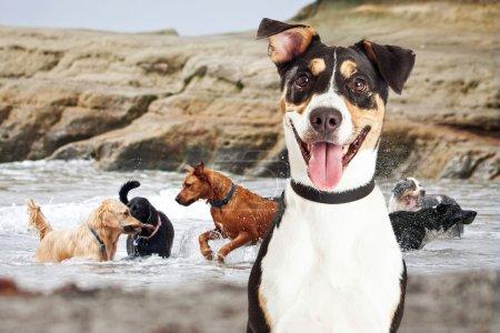 Dogs Having Fun At Dog Beach
