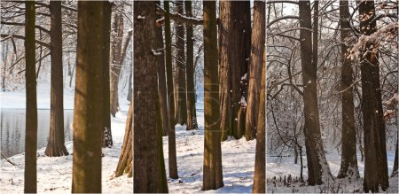 Snow-covered tree trunks and branches. Beautiful winter landscape with snow and lake. Winter in forest, sun shining through branches. Bright snow blanket in woods, sunny cold winter day