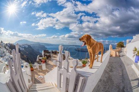 Dog on the wall, Santorini island in Greece