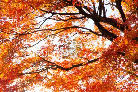 Colorful Autumn Leaves with Sunlight