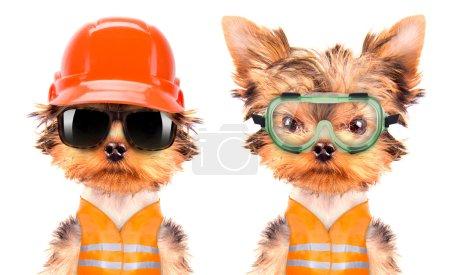 dog  dressed as builder