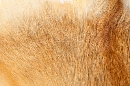 Textures red fox fur