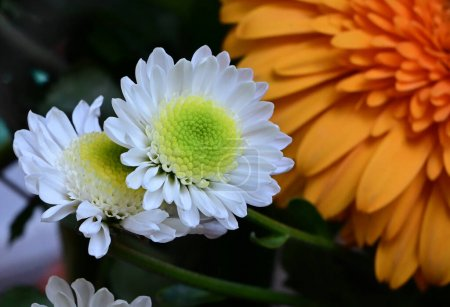 Photo pour Tendres belles fleurs. gros plan. - image libre de droit