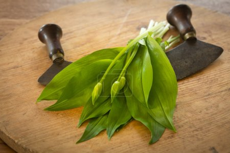 Photo for Fresh ramsons on a rustic wooden plate - Royalty Free Image