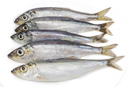 Several sprats closeup