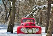 Golden retrievers in Christmas truck