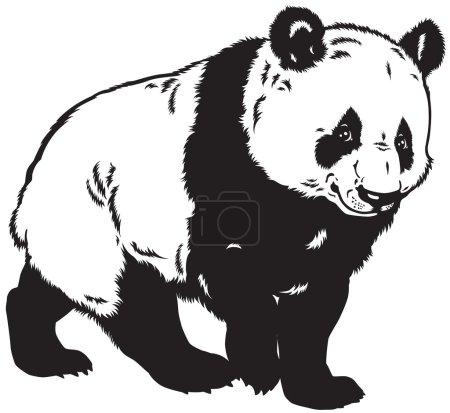 Illustration for Giant panda bear, black and white image - Royalty Free Image