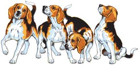 Four beagles