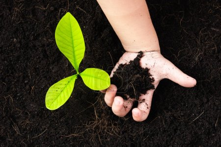 Top view of a green little seedling young tree in black soil on child's hands he is planting, Concept of global pollution, Save Earth day and Hand Environment conservation