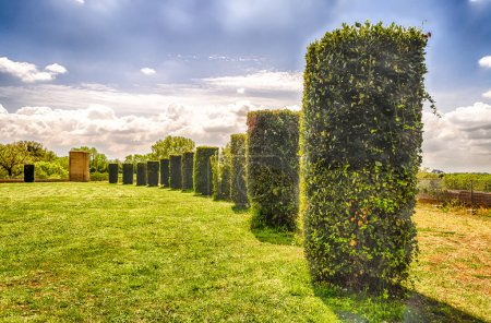 Garden with Columns of bushes in a row